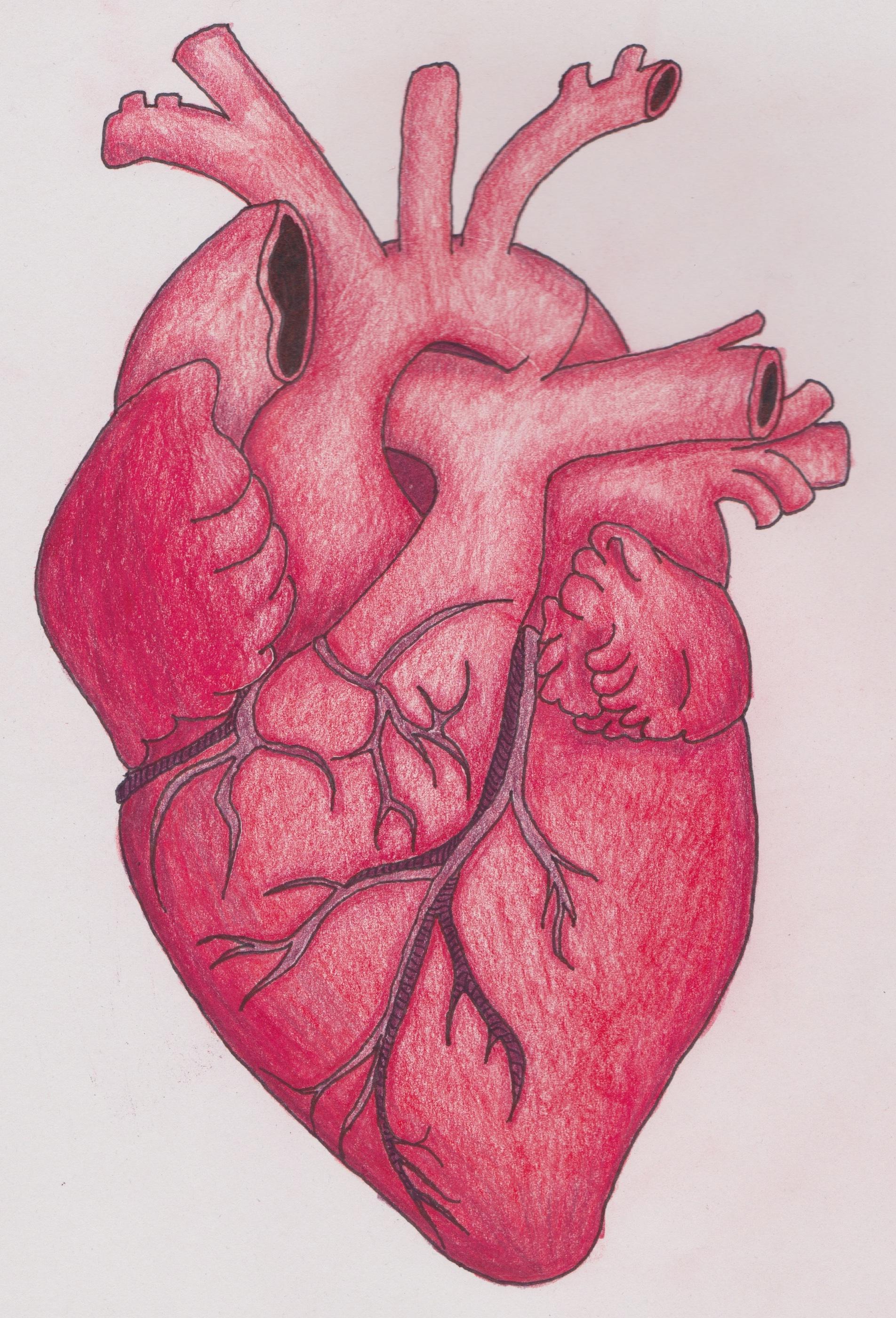 Картинки к слову сердце человека
