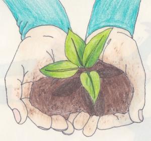 give seedling