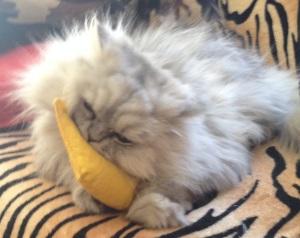 Ewok with her Catnip Banana